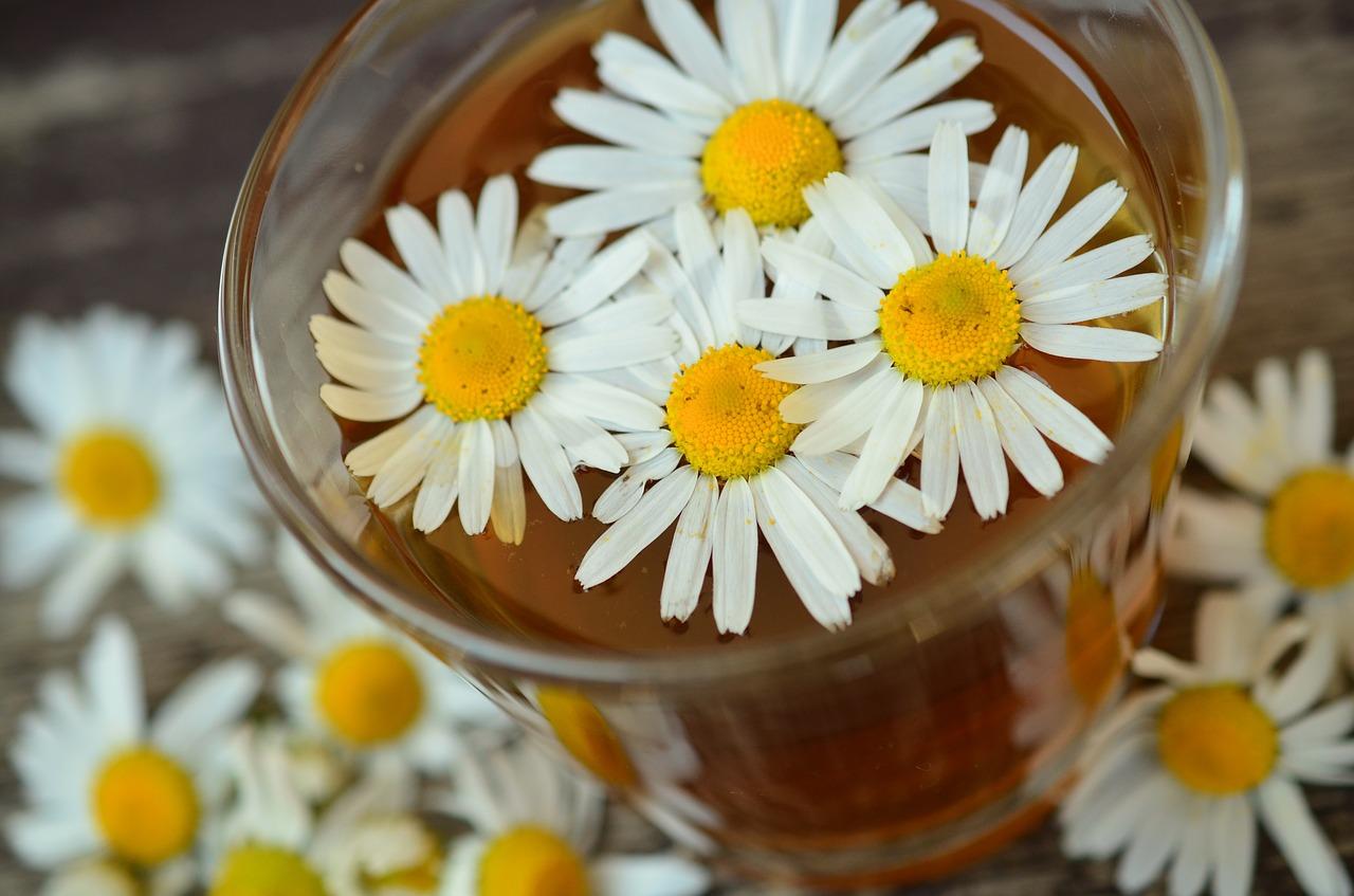 Bezpieczna apteczka babci – apteka medyczno zielarska. Sklep z ziołami