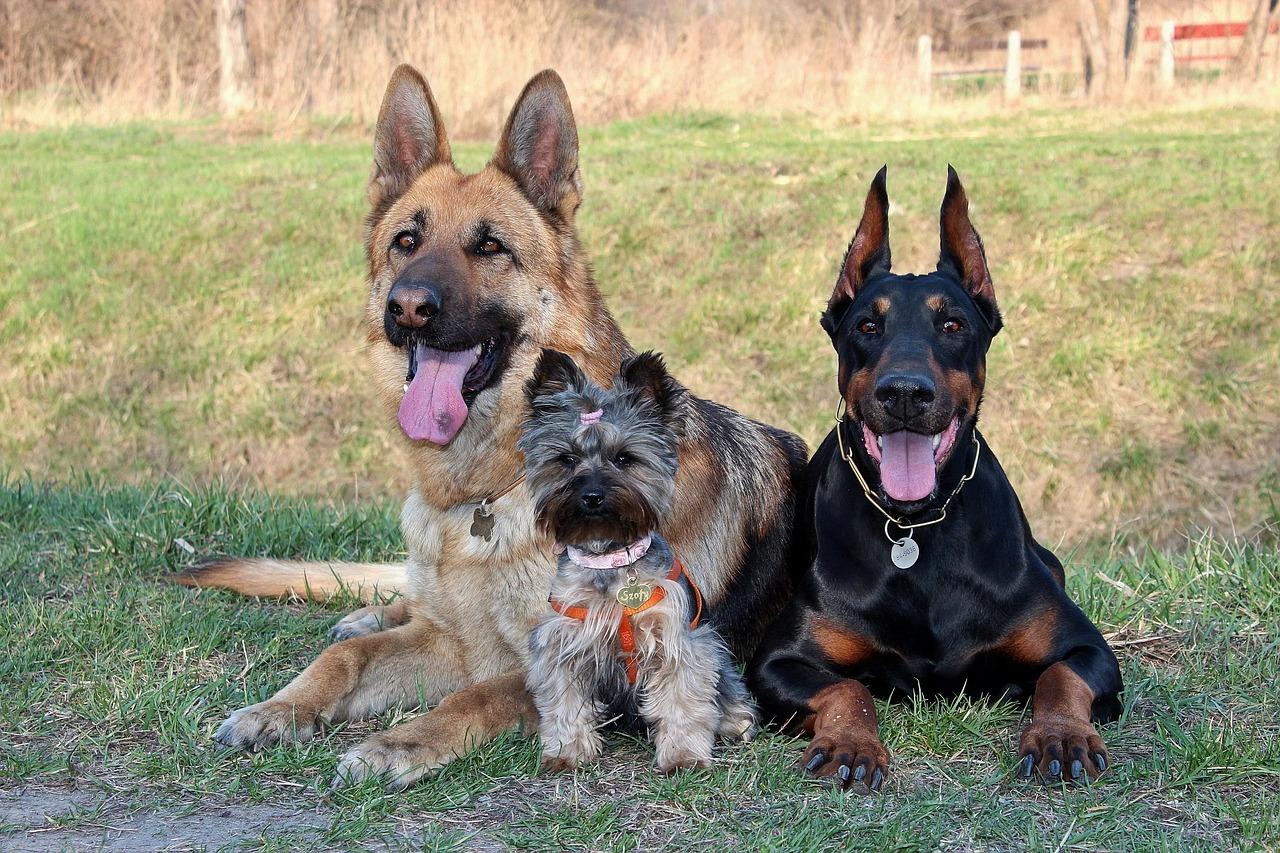 Duży pies, odpowiedni dla rodziny z dziećmi
